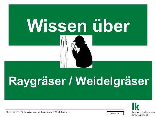 Wissen über Raygräser / Weidelgräser DI. J.HUMER, Mehr Wissen über Raygräser / Weidelgräser  Folie - 1