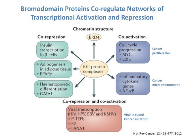 Myc Family Of Proteins Nature Reviews