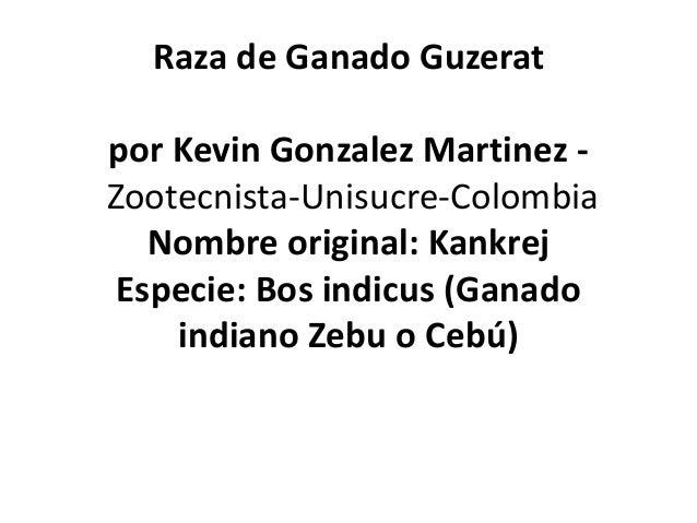 Raza de Ganado Guzerat por Kevin Gonzalez Martinez Zootecnista-Unisucre-Colombia Nombre original: Kankrej Especie: Bos ind...