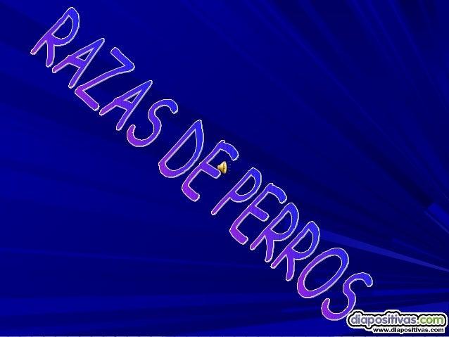 SALUDOS AFICIONAD@S DE    LOS PERROS, EN ESTE     POWERPOINT VAS AENCONTRAR UNAS 100 RAZASDE PERROS QUE EXISTEN ENLA ACTUA...