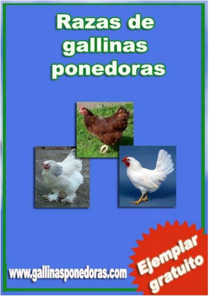 RAZAS DE GALLINAS PONEDORAS 2009                                   1