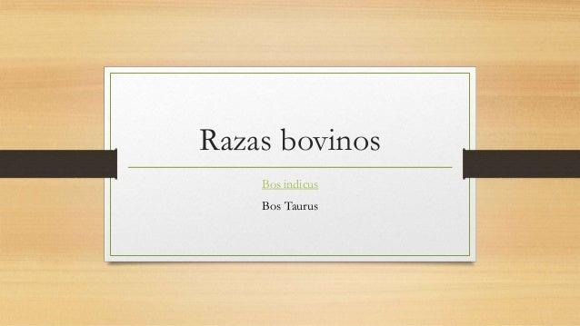 Razas bovinos Bos indicus Bos Taurus
