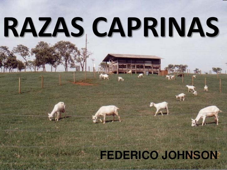 RAZAS CAPRINAS      RAZAS           FEDERICO JOHNSON
