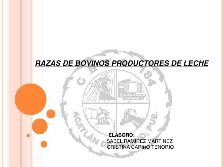 RAZAS DE BOVINOS PRODUCTORES DE LECHE                    .                 ELABORO:               ISABEL RAMIREZ MARTINEZ ...