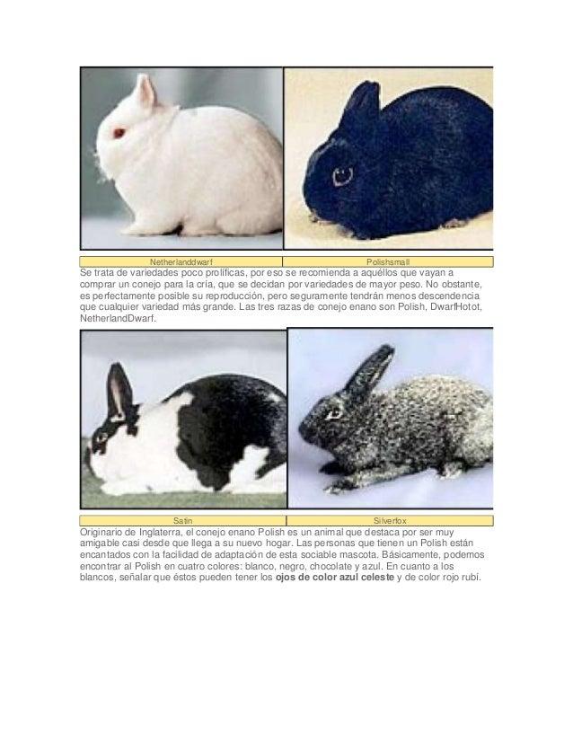 Lujoso Libro De Colores De Conejos Blancos Bandera - Páginas Para ...