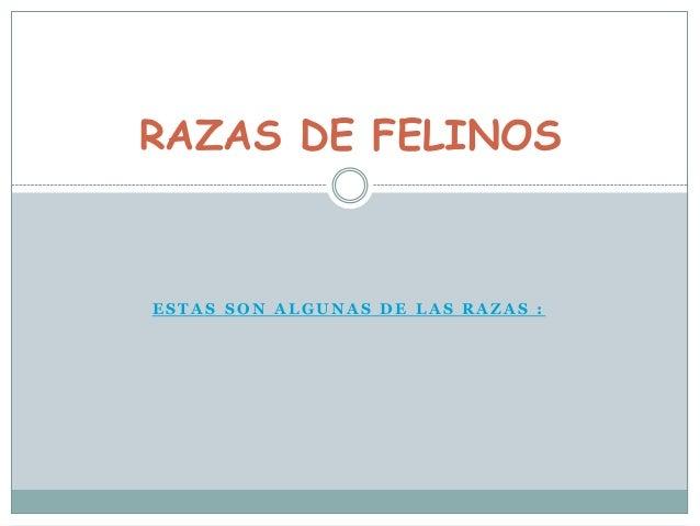 RAZAS DE FELINOS  ESTAS SON ALGUNAS DE LAS RAZAS :