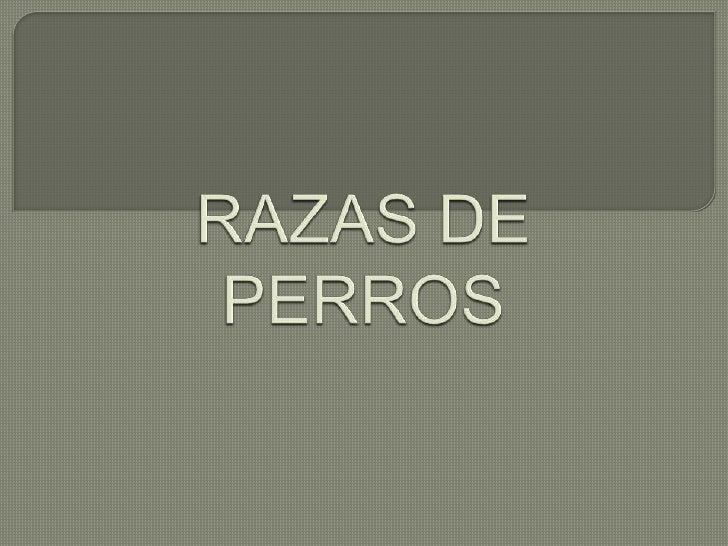 RAZAS DE PERROS<br />