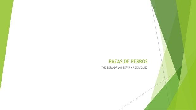 RAZAS DE PERROS VICTOR ADRIAN ESPAÑA RODRIGUEZ