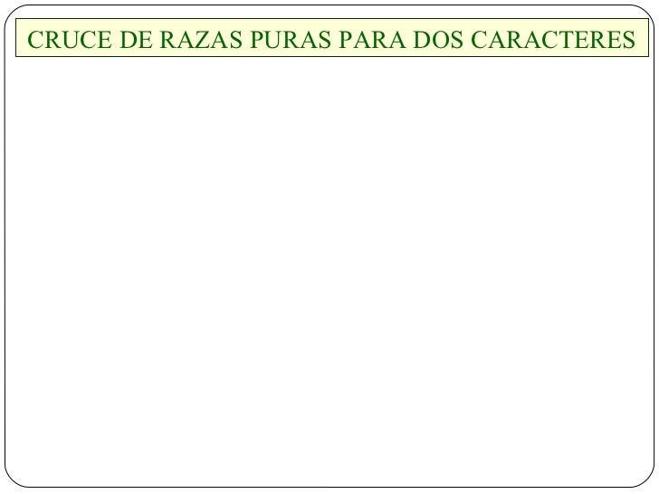 CRUCE DE RAZAS PURAS PARA DOS CARACTERES
