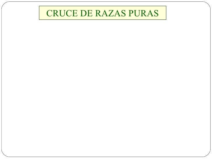 CRUCE DE RAZAS PURAS