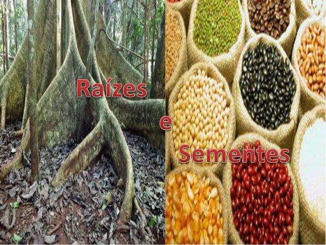 A raiz é o órgão da planta que normalmente se encontra abaixo da superfície do solo. Quase sempre a raiz é originada a par...