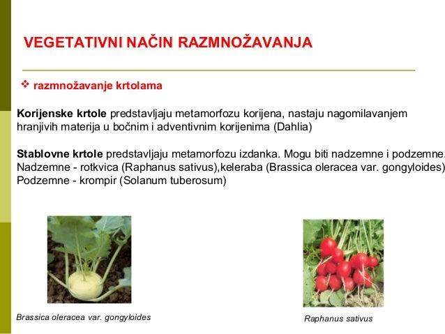 Razmnozavanje biljaka