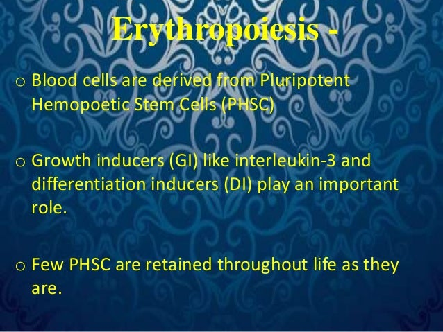 Erythropoiesis -  o Blood cells are derived from Pluripotent  Hemopoetic Stem Cells (PHSC)  o Growth inducers (GI) like in...