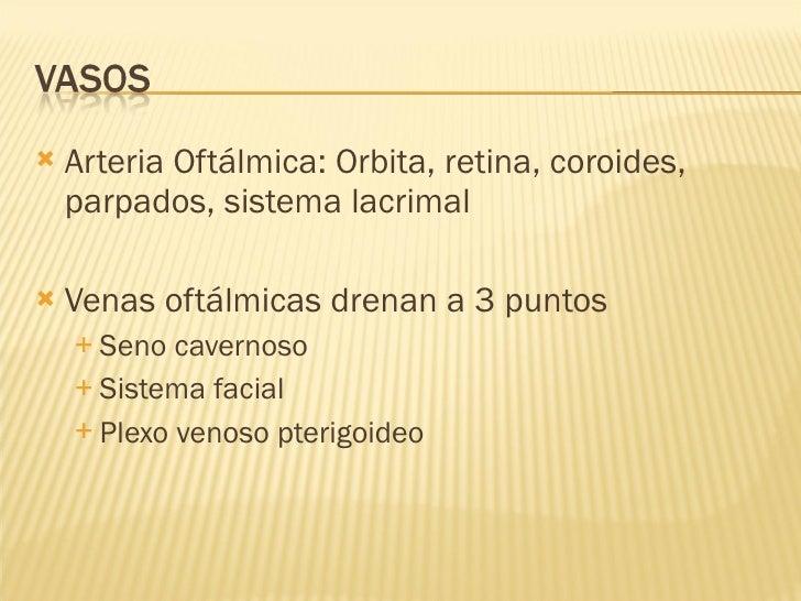 <ul><li>Arteria Oftálmica: Orbita, retina, coroides, parpados, sistema lacrimal </li></ul><ul><li>Venas oftálmicas drenan ...