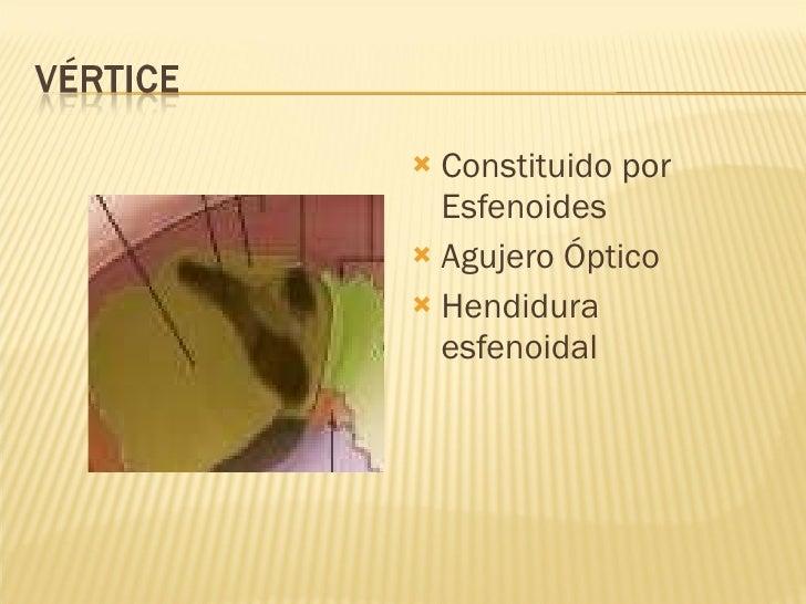 <ul><li>Constituido por Esfenoides </li></ul><ul><li>Agujero Óptico </li></ul><ul><li>Hendidura esfenoidal </li></ul>