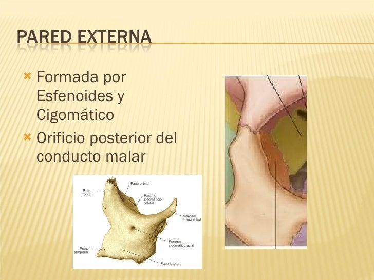 <ul><li>Formada por Esfenoides y Cigomático </li></ul><ul><li>Orificio posterior del conducto malar  </li></ul>