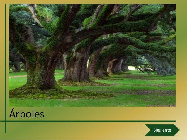 Árboles          Siguiente
