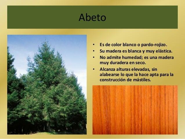Abeto• Es de color blanco o pardo-rojizo.• Su madera es blanca y muy elástica.• No admite humedad; es una maderamuy durade...