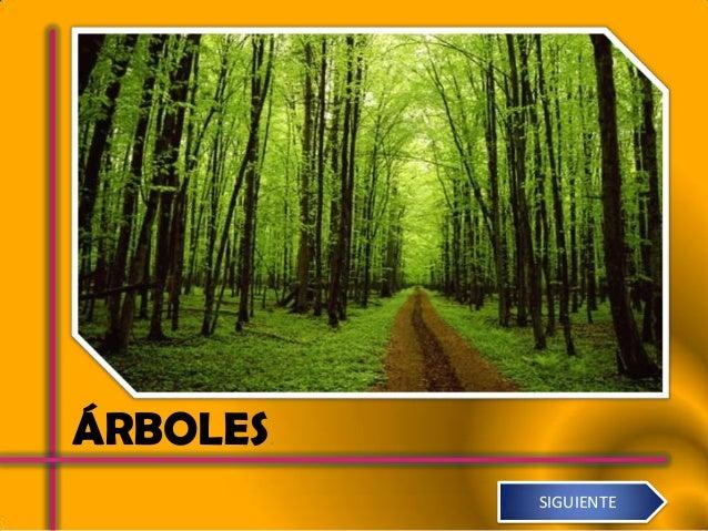 ÁRBOLES.           SIGUIENTE