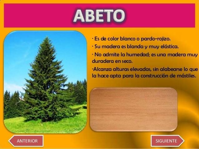 Diferentes tipos de rboles for Arboles con sus nombres y caracteristicas
