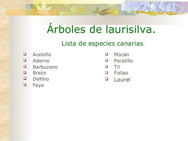 Arboles de laurisilva canarios for Lista de arboles perennes