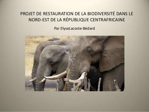 PROJET DE RESTAURATION DE LA BIODIVERSITÉ DANS LENORD-EST DE LA RÉPUBLIQUE CENTRAFRICAINEPar ElyseLacoste-Bédard