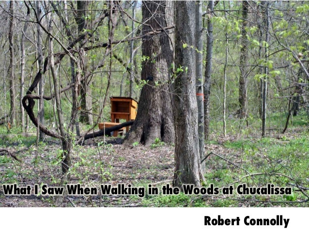 What I Saw When Walking in the Woods at Chucalissa –        Robert Connolly