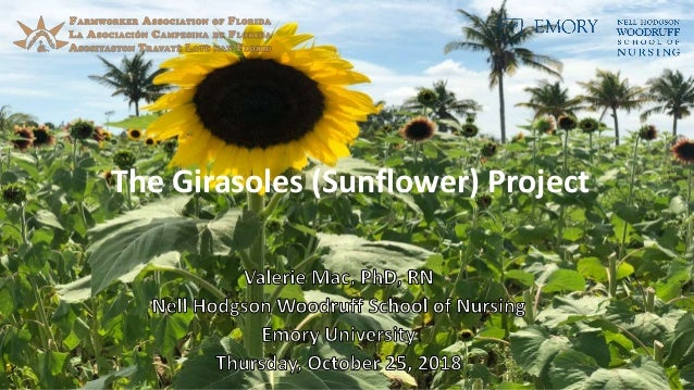 The Girasoles (Sunflower) Project