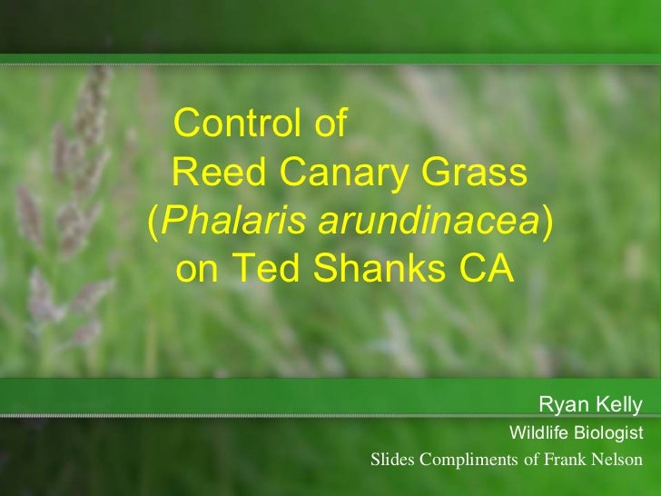 Control of Reed Canary Grass(Phalaris arundinacea)  on Ted Shanks CA                                 Ryan Kelly           ...