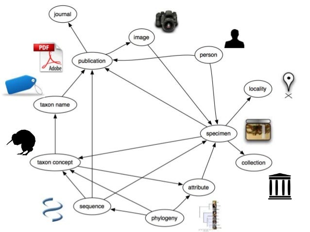Building the Biodiversity Knowledge Graph