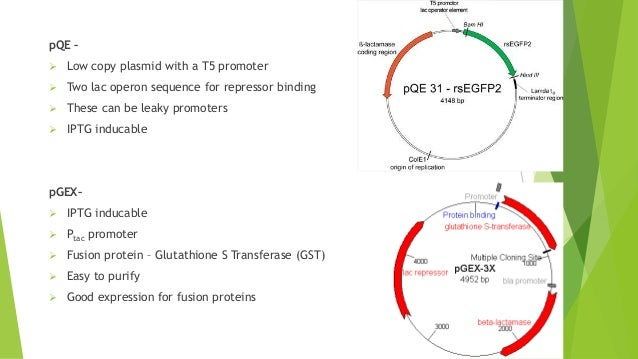 Expression and purification of recombinant proteins in Bacterial and