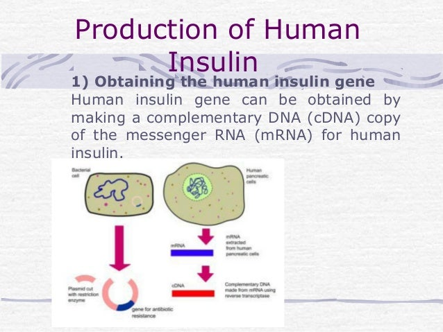 human insulin and recombinant dna technology essay 2018-8-10 pros and cons of recombinant dna technology  escherichia coli producing biosynthetic human insulin  of recombinant dna technology essay.