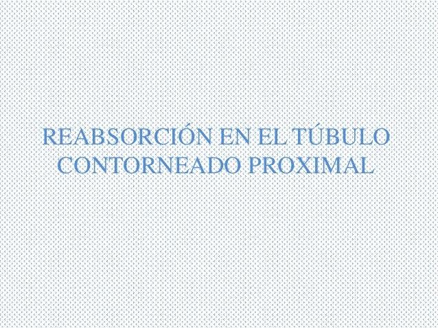 REABSORCIÓN EN EL TÚBULOCONTORNEADO PROXIMAL
