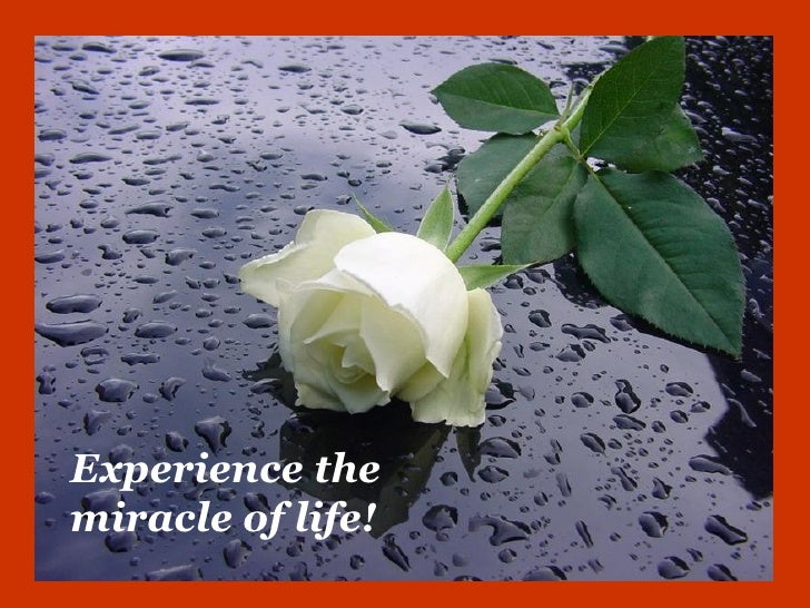 Experience themiracle of life!