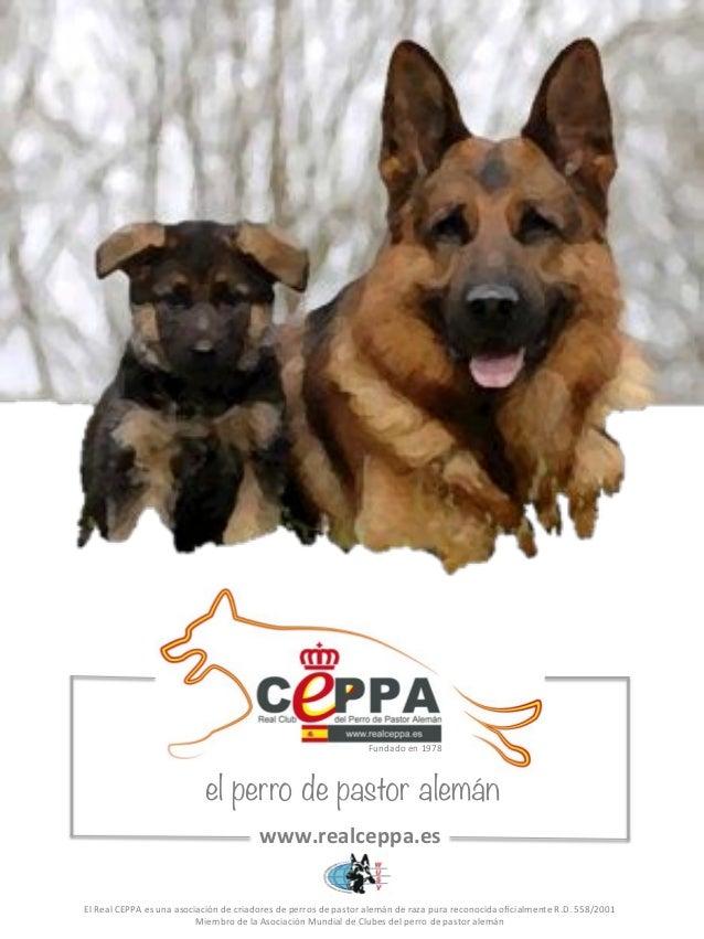 Fundado#en#1978#  el perro de pastor alemán  www.realceppa.es*  El#Real#CEPPA#es#una#asociación#de#criadores#de#perros#de#...