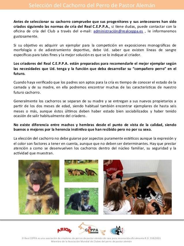 Selección#del#Cachorro#del#Perro#de#Pastor#Alemán#  Antes*de*seleccionar*su*cachorro*compruebe*que*sus*progenitores*y*sus*...