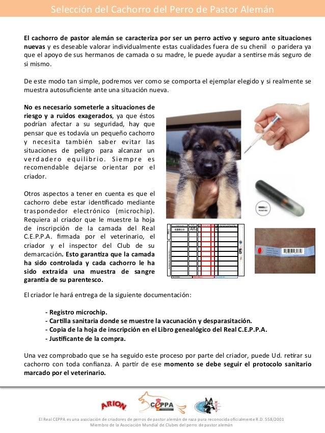 Selección#del#Cachorro#del#Perro#de#Pastor#Alemán#  El*cachorro*de*pastor*alemán*se*caracteriza*por*ser*un*perro*ac5vo*y*s...