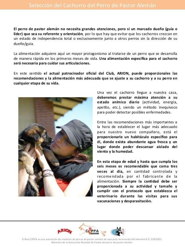 Selección#del#Cachorro#del#Perro#de#Pastor#Alemán#  El*perro*de*pastor*alemán*no*necesita*grandes*atenciones,*pero*si*un*m...