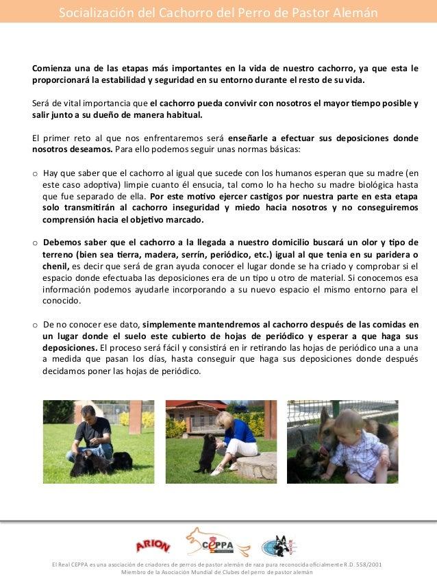 Socialización#del#Cachorro#del#Perro#de#Pastor#Alemán#  Comienza*una*de* las* etapas*más* importantes*en* la* vida*de*nues...