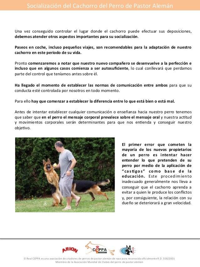 Socialización#del#Cachorro#del#Perro#de#Pastor#Alemán#  Una# vez# conseguido# controlar# el# lugar# donde# el# cachorro# p...