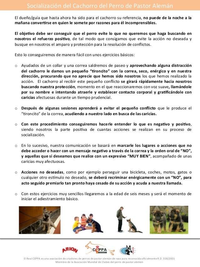 Socialización#del#Cachorro#del#Perro#de#Pastor#Alemán#  El#dueño/guía#que#hasta#ahora#ha#sido#para#el#cachorro#su#referenc...