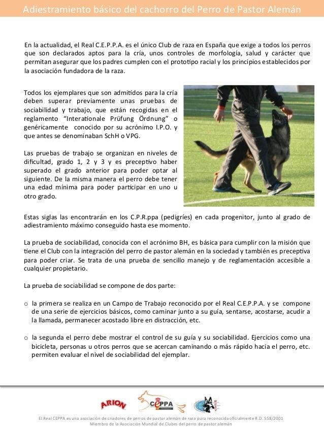 Adiestramiento#básico#del#cachorro#del#Perro#de#Pastor#Alemán#  En#la#actualidad,#el#Real#C.E.P.P.A.#es#el#único#Club#de#r...