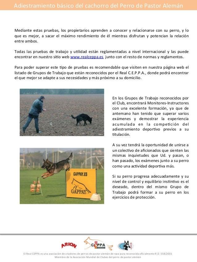 Adiestramiento#básico#del#cachorro#del#Perro#de#Pastor#Alemán#  El#Real#CEPPA#es#una#asociación#de#criadores#de#perros#de#...