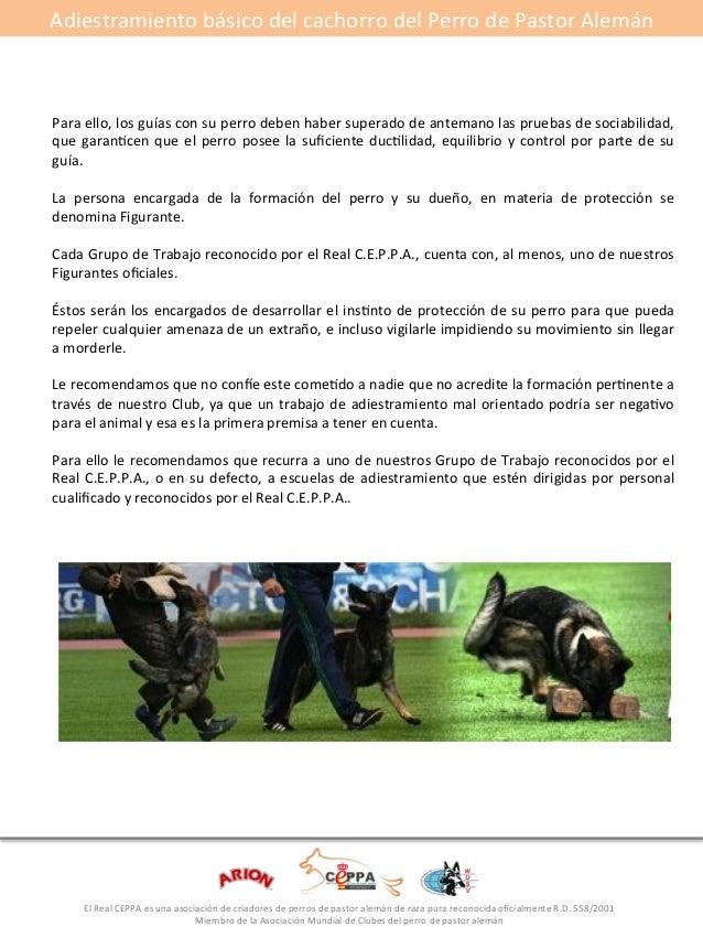 Adiestramiento#básico#del#cachorro#del#Perro#de#Pastor#Alemán#  #  Para#ello,#los#guías#con#su#perro#deben#haber#superado#...