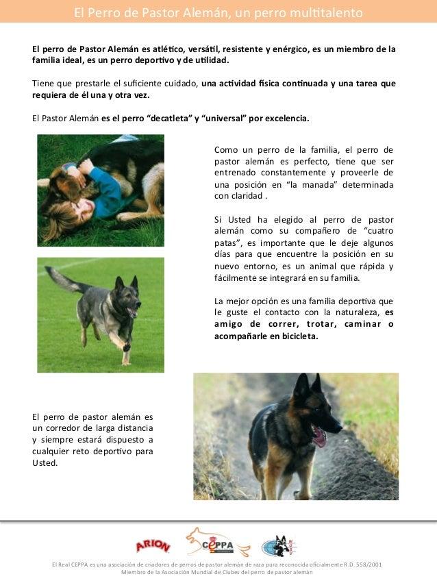 El#Perro#de#Pastor#Alemán,#un#perro#mulGtalento#  El*perro*de*Pastor*Alemán*es*atlé5co,*versá5l,*resistente*y*enérgico,*es...