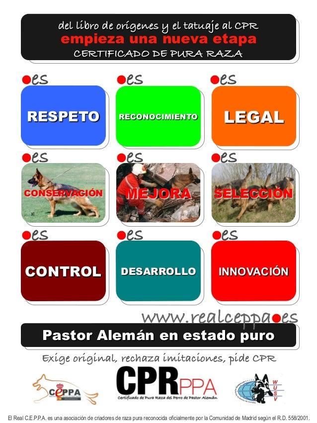 del libro de orígenes y el tatuaje al CPR  empieza una nueva etapa  CERTIFICADO DE PURA RAZA  es es es  RESPETO RECONOC...