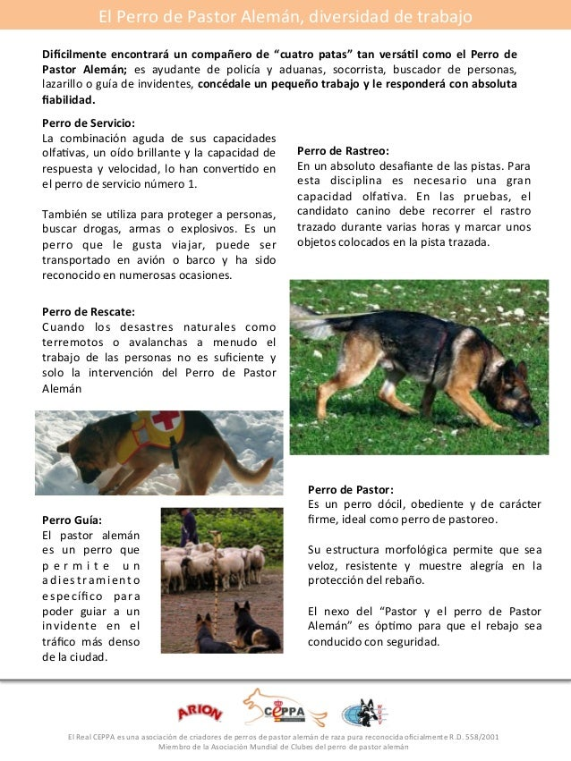 """El#Perro#de#Pastor#Alemán,#diversidad#de#trabajo#  Di>cilmente* encontrará*un* compañero*de* """"cuatro*patas""""* tan* versá5l*..."""