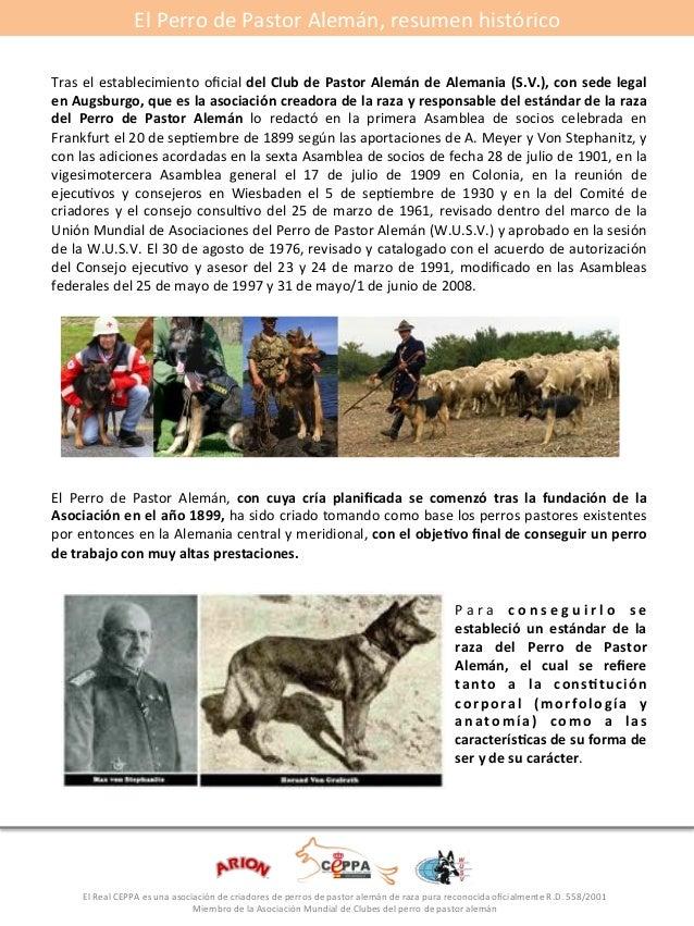El#Perro#de#Pastor#Alemán,#resumen#histórico#  Tras#el#establecimiento#oficial#del*Club*de*Pastor*Alemán*de*Alemania*(S.V....