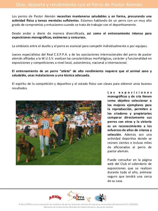 Ocio,#deporte#y#rendimiento#con#el#Perro#de#Pastor#Alemán#  #  Los# perros# de# Pastor# Alemán# necesitan*mantenerse* salu...