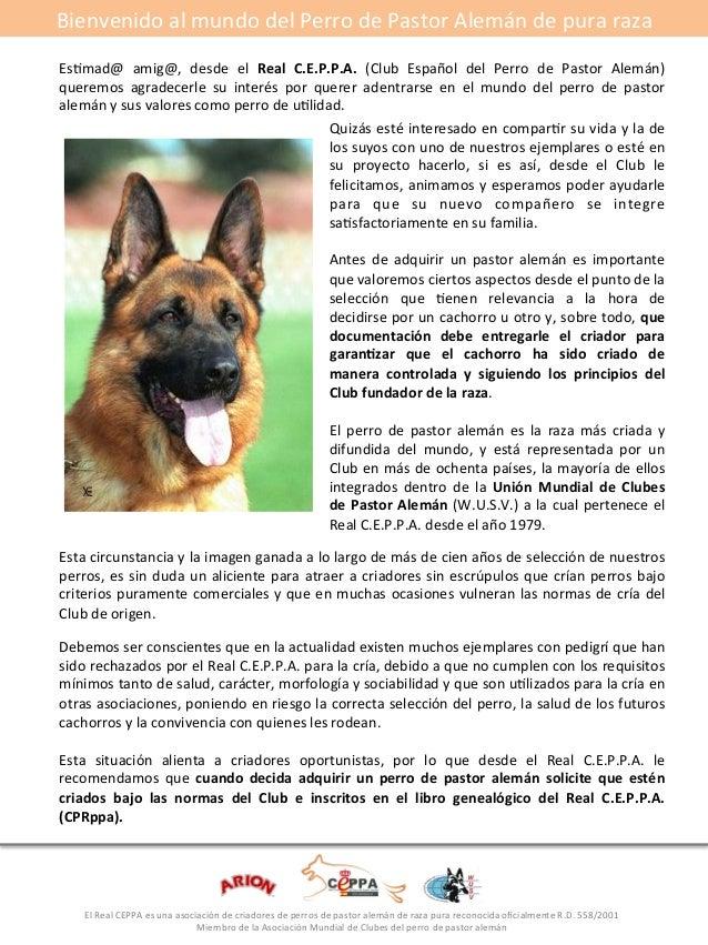 Bienvenido#al#mundo#del#Perro#de#Pastor#Alemán#de#pura#raza#  EsGmad@# amig@,# desde# el# Real* C.E.P.P.A.* (Club# Español...
